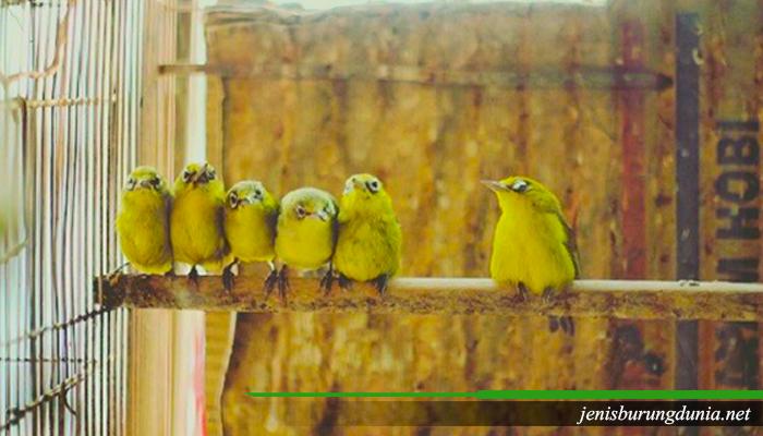 Tips dan trik Merawat Burung