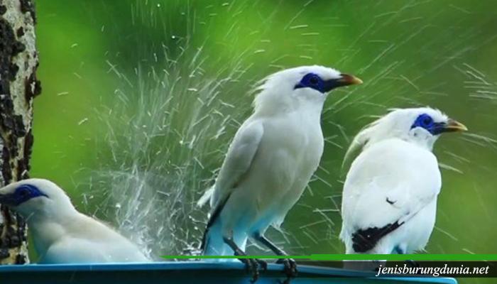 Trik menjaga kesehatan Burung