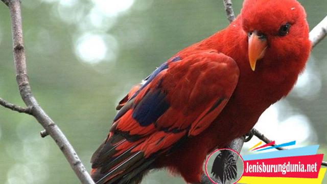 Proses Pelepasan Burung Paruh Bengkok Hasil Sitaan