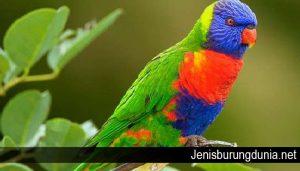 Cara Merawat Burung Nuri Agar Bisa Bicara Seperti Manusia