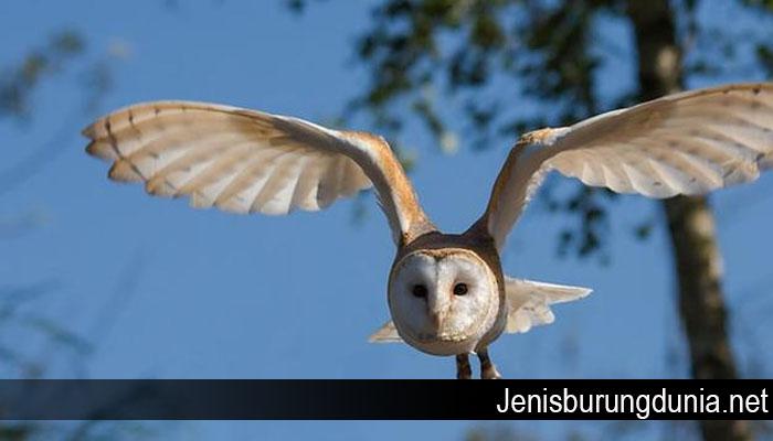 Makna Burung Sesuai Bulan Kelahiranmu