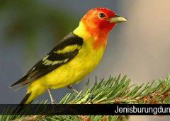 Mengenal Karakter Dasar Dari Burung Kenari