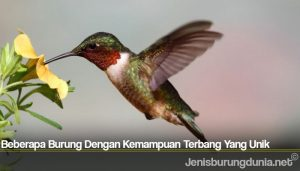 Beberapa Burung Dengan Kemampuan Terbang Yang Unik