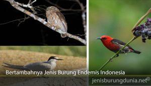 Bertambahnya Jenis Burung Endemis Indonesia