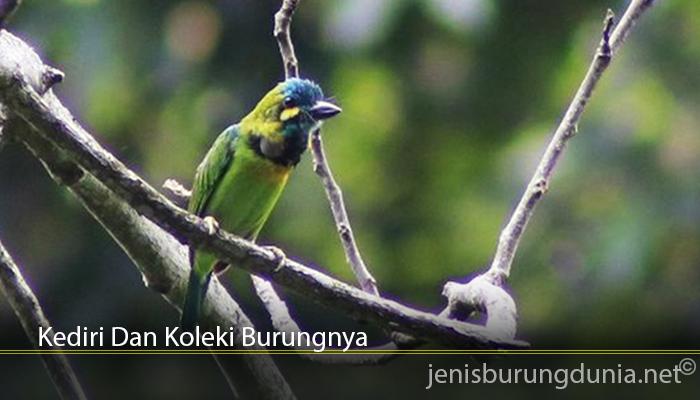 Kediri Dan Koleki Burungnya