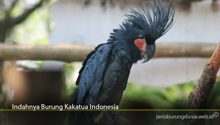 Indahnya Burung Kakatua Indonesia