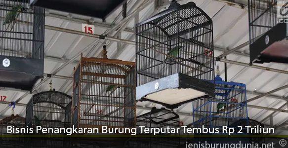 Bisnis-Penangkaran-Burung-Terputar-Tembus-Rp-2-Triliun