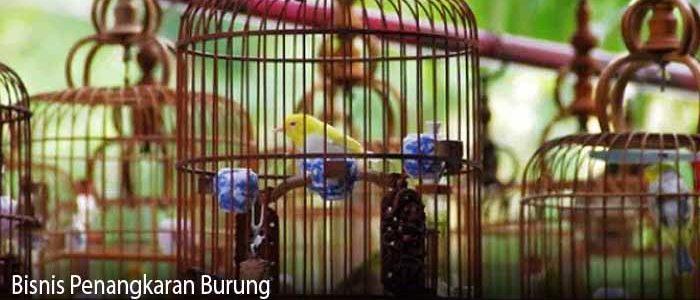 Bisnis Penangkaran Burung