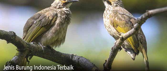 Jenis Burung Indonesia Terbaik