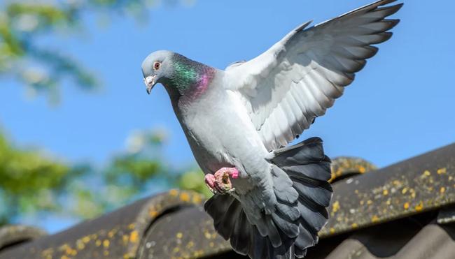Jenis Burung Termahal di Dunia