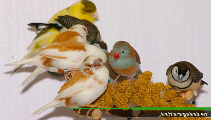 Lima jenis burung Pemakan biji