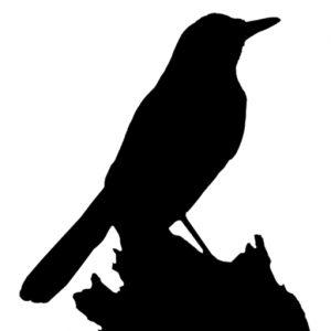 jenis burung dunia