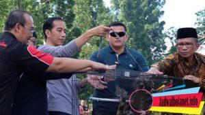 Jokowi Mengikuti Pertandingan Burung Murai Batu