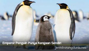Emperor Penguin Punya Kerajaan Sendiri