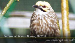 Bertambah 6 Jenis Burung Di 2019
