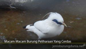 Macam Macam Burung Peliharaan Yang Cerdas