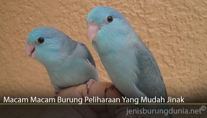 Macam Macam Burung Peliharaan Yang Mudah Jinak