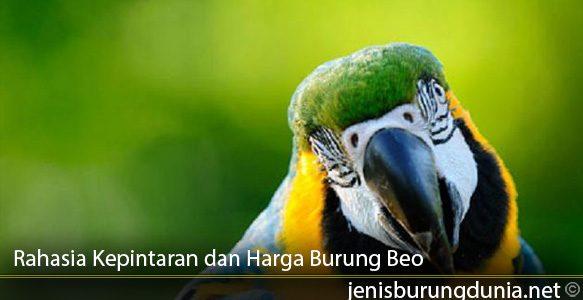 Rahasia-Kepintaran-dan-Harga-Burung-Beo