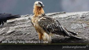 Jenis Burung Paling Berbahaya di Dunia