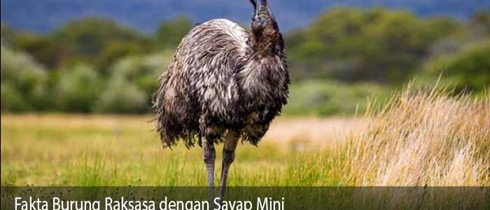 Fakta Burung Raksasa dengan Sayap Mini
